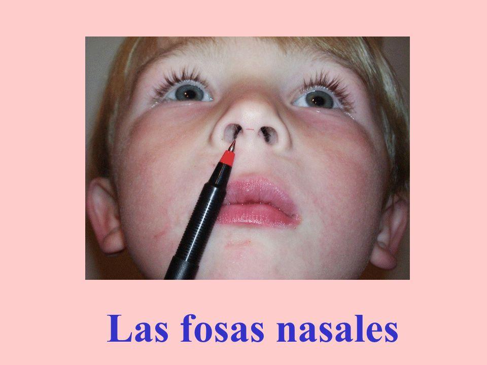 La nariz