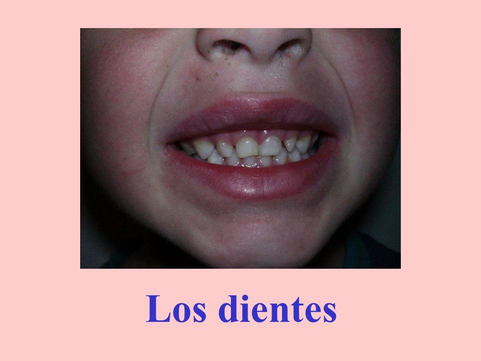 Los labios