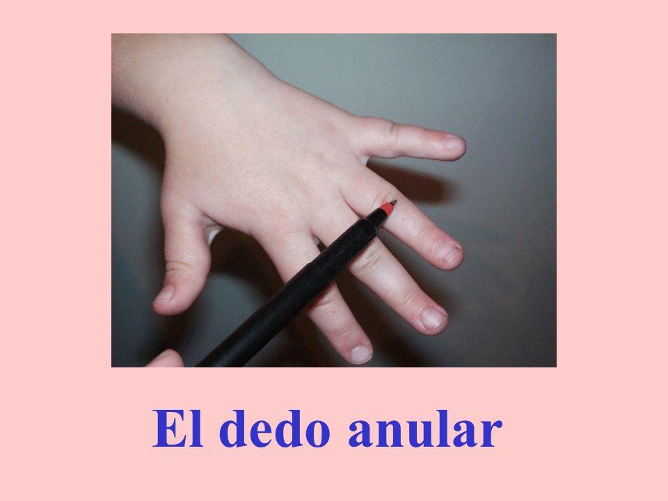 El dedo corazón