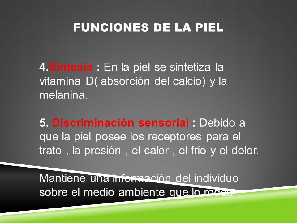 FUNCIONES DE LA PIEL 4.Síntesis : En la piel se sintetiza la vitamina D( absorción del calcio) y la melanina.