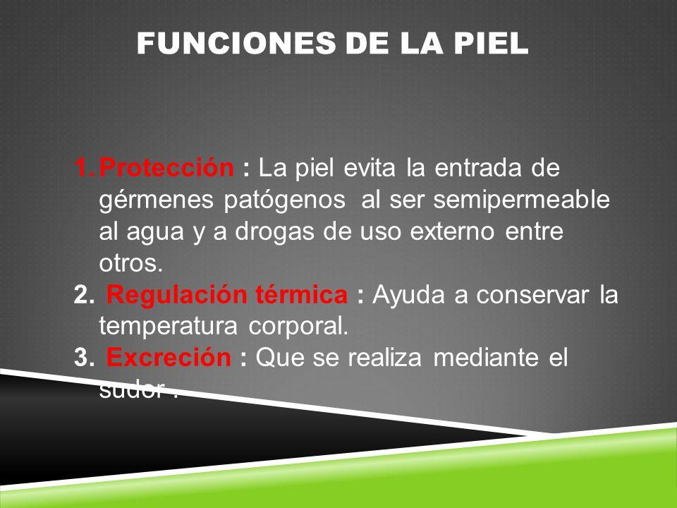 FUNCIONES DE LA PIEL 1.Protección : La piel evita la entrada de gérmenes patógenos al ser semipermeable al agua y a drogas de uso externo entre otros.