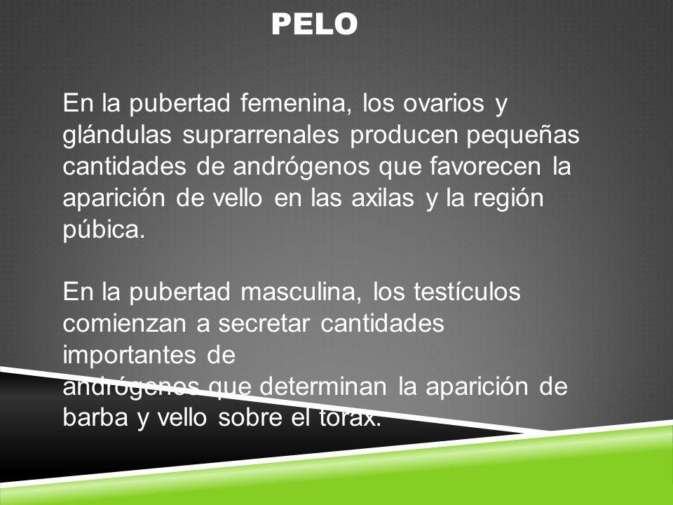 PELO En la pubertad femenina, los ovarios y glándulas suprarrenales producen pequeñas cantidades de andrógenos que favorecen la aparición de vello en las axilas y la región púbica.