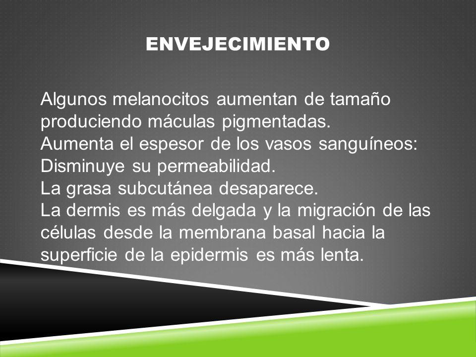 ENVEJECIMIENTO Algunos melanocitos aumentan de tamaño produciendo máculas pigmentadas.
