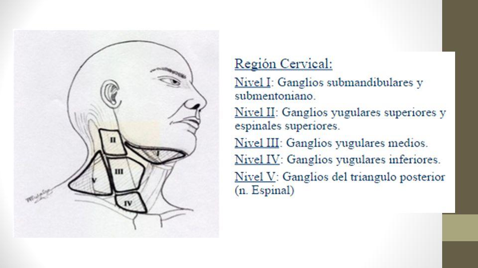 Beneficio de la disección cervical electiva en el momento de la cirugía primaria.