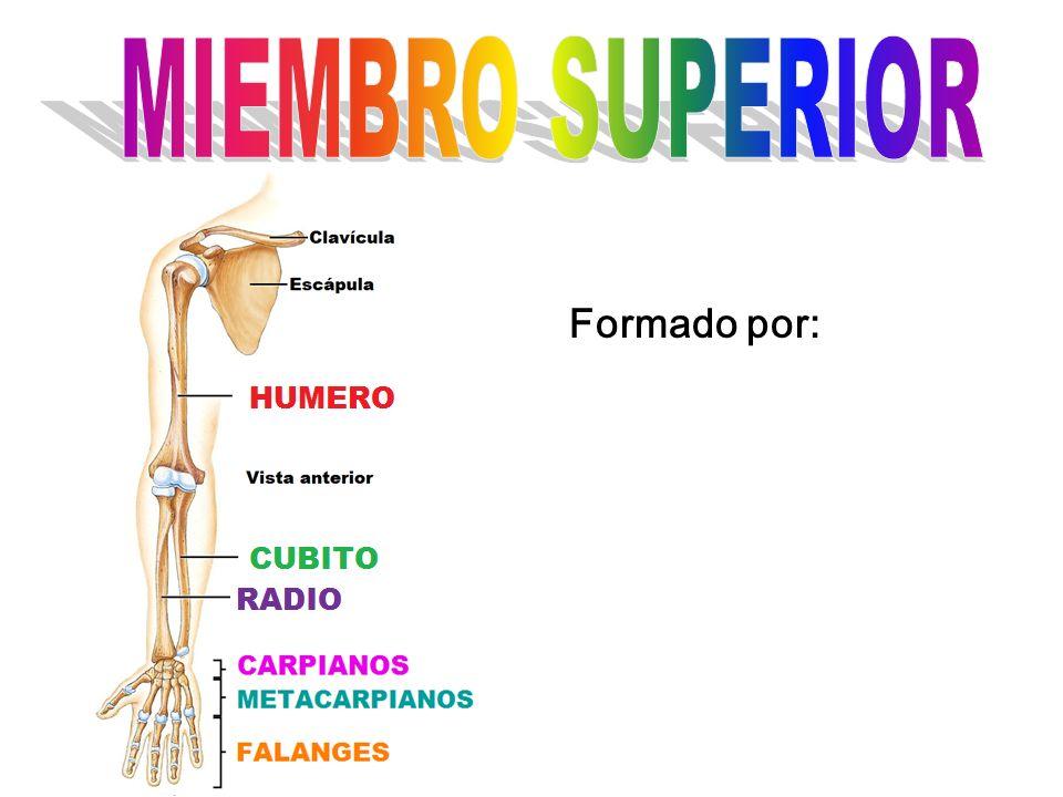 Formado por: