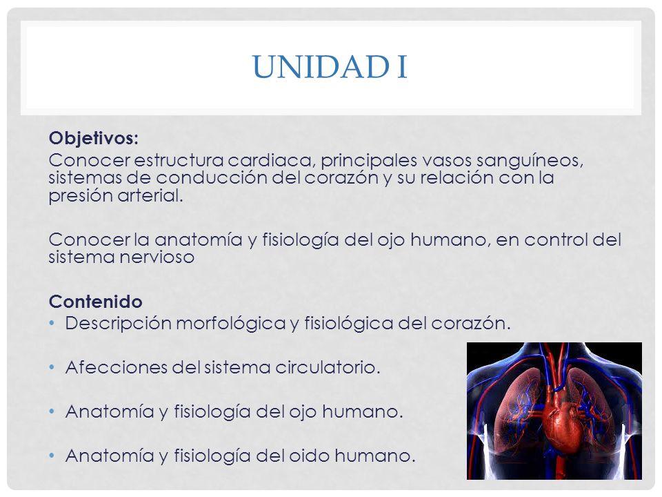 Fantástico Anatomía Y Fisiología Del Ojo Humano Galería - Imágenes ...