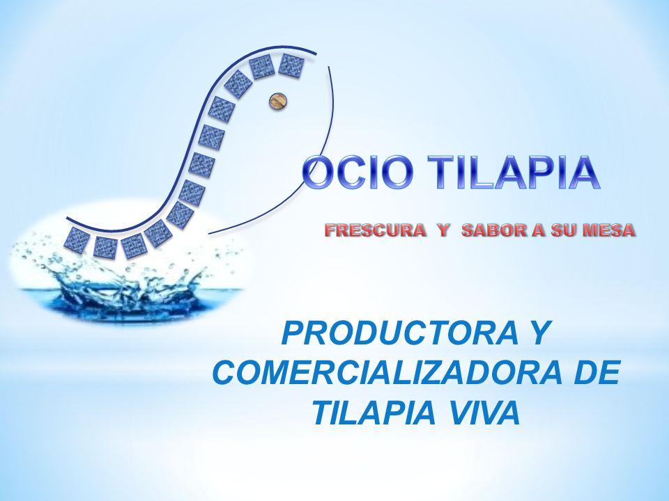 PRODUCTORA Y COMERCIALIZADORA DE TILAPIA VIVA