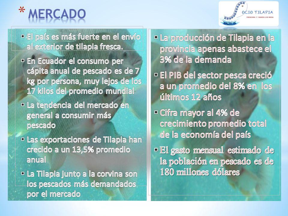 * Se recomienda Establecer y registrar la marca Socio Tilapia para la comercialización en el mercado local y nacional.
