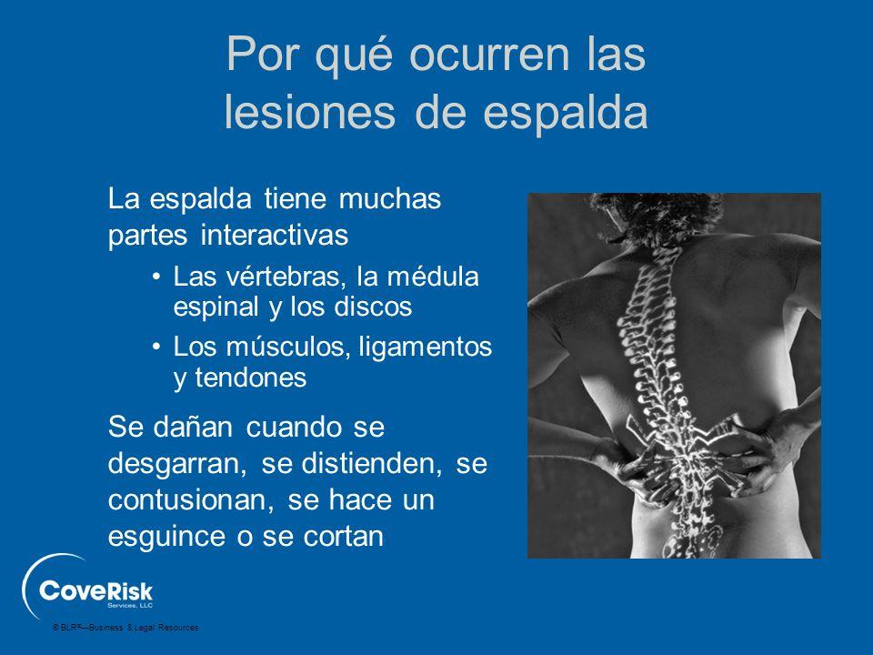 © BLR ® —Business & Legal Resources La espalda tiene muchas partes interactivas Las vértebras, la médula espinal y los discos Los músculos, ligamentos