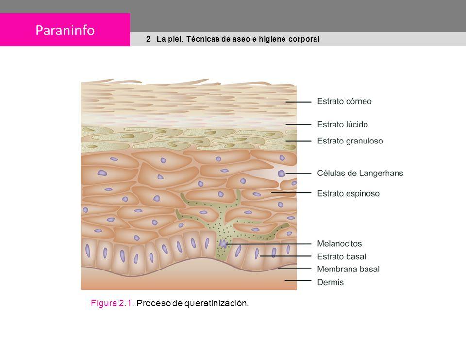 Paraninfo 2 La piel. Técnicas de aseo e higiene corporal Figura 2.1. Proceso de queratinización.