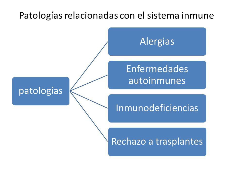 Hipersensibilidad Se presenta en personas que tiene una respuesta inmune exacerbada frente a sustancias aparentemente inofensivas.