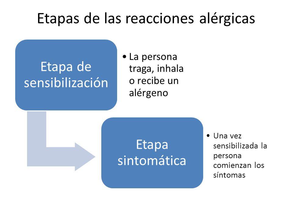 Etapas de las reacciones alérgicas Etapa de sensibilización La persona traga, inhala o recibe un alérgeno Etapa sintomática Una vez sensibilizada la persona comienzan los síntomas