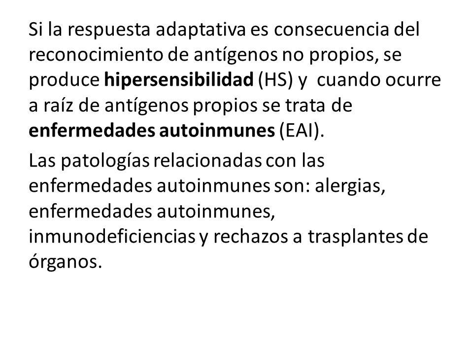 Si la respuesta adaptativa es consecuencia del reconocimiento de antígenos no propios, se produce hipersensibilidad (HS) y cuando ocurre a raíz de antígenos propios se trata de enfermedades autoinmunes (EAI).
