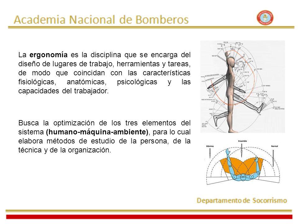 Anatomía de la espalda: La espalda esta soportada por la columna vertebral, que está formada por 24 vertebras.