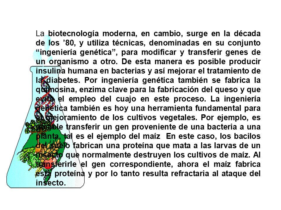 La biotecnología moderna, en cambio, surge en la década de los '80, y utiliza técnicas, denominadas en su conjunto ingeniería genética , para modificar y transferir genes de un organismo a otro.