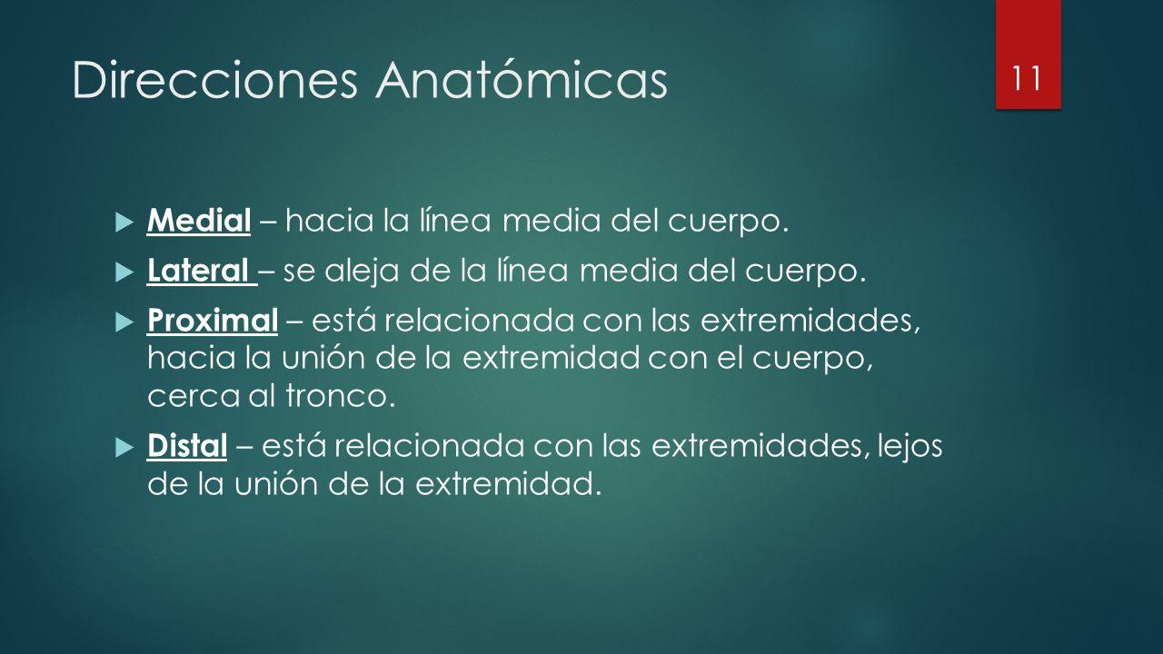 Direcciones Anatómicas  Medial – hacia la línea media del cuerpo.