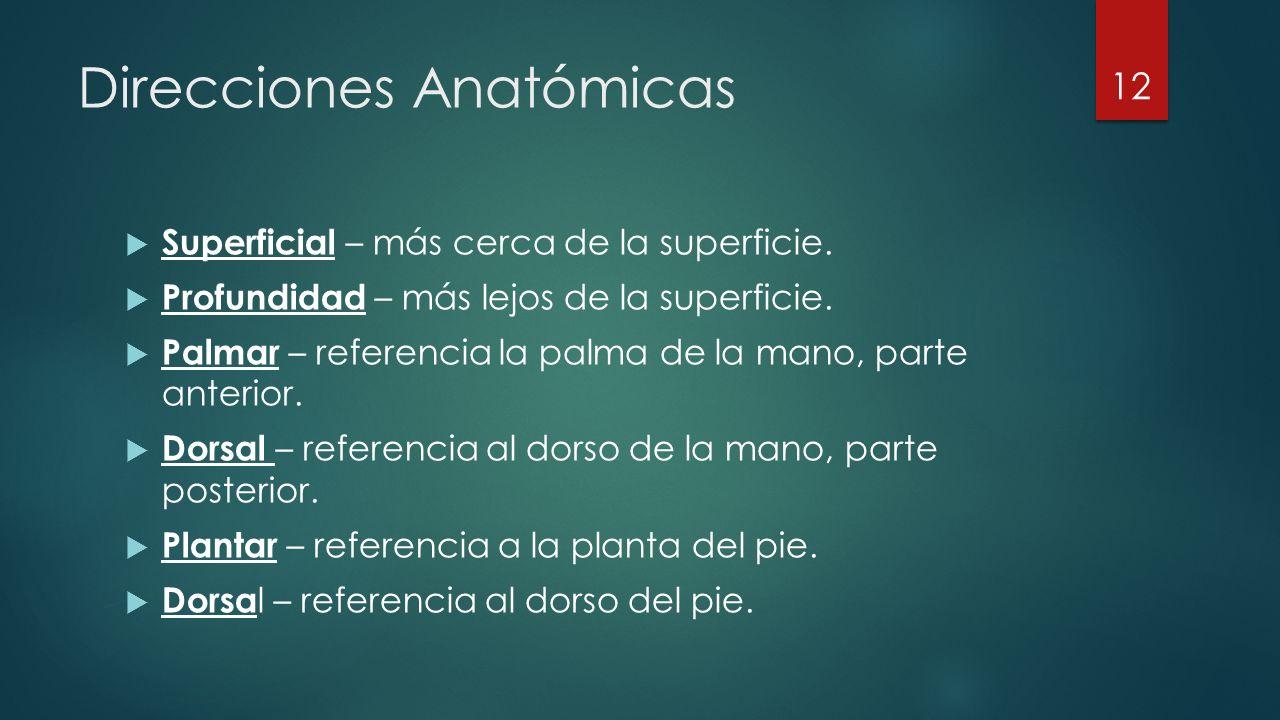 Direcciones Anatómicas  Superficial – más cerca de la superficie.