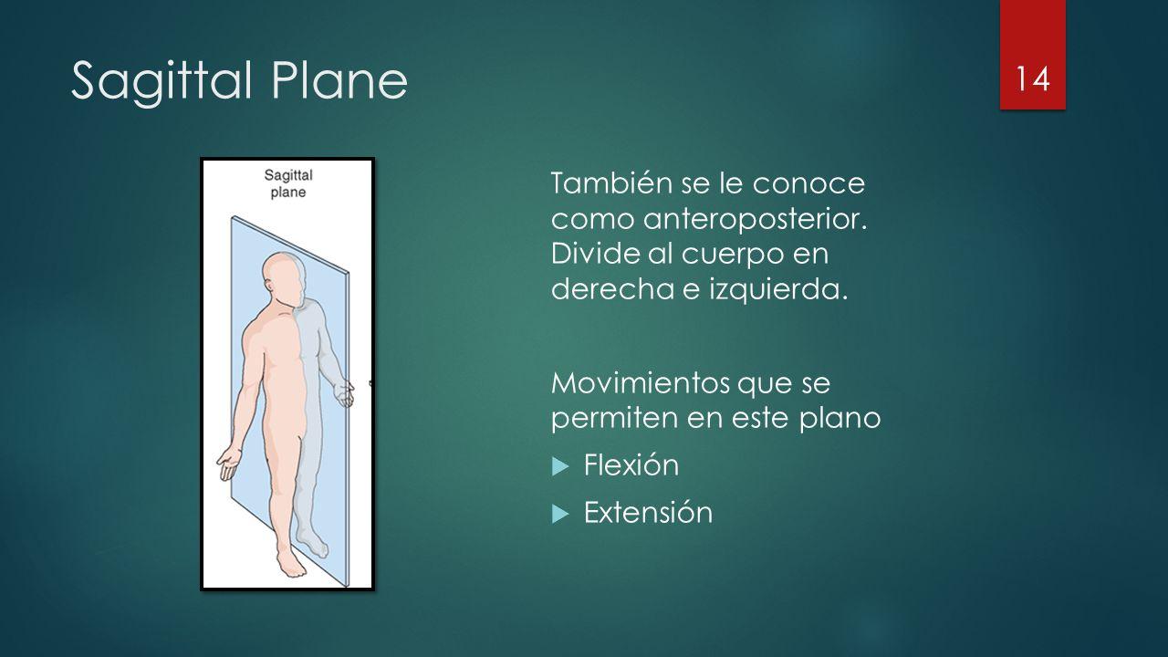 Sagittal Plane También se le conoce como anteroposterior.
