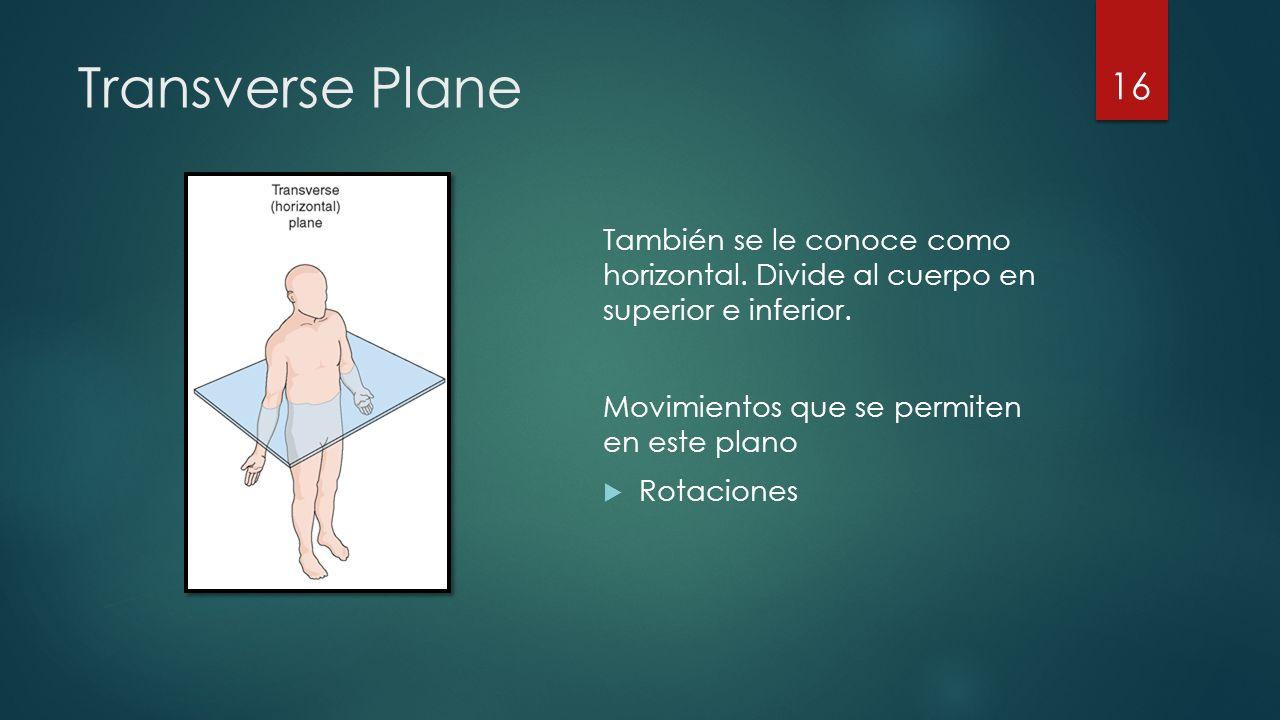 Transverse Plane También se le conoce como horizontal.