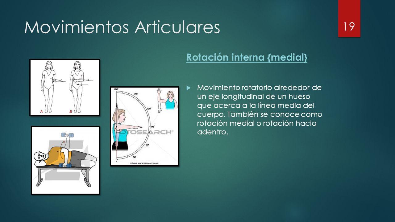 Movimientos Articulares Rotación interna {medial}  Movimiento rotatorio alrededor de un eje longitudinal de un hueso que acerca a la línea media del cuerpo.