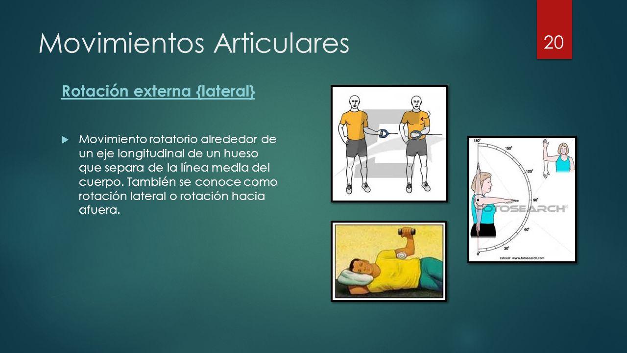 Movimientos Articulares Rotación externa {lateral}  Movimiento rotatorio alrededor de un eje longitudinal de un hueso que separa de la línea media del cuerpo.