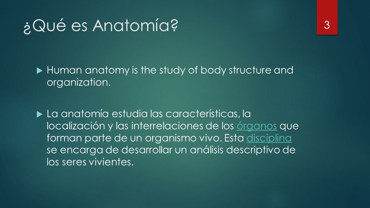 ¿Qué es Anatomía. Human anatomy is the study of body structure and organization.