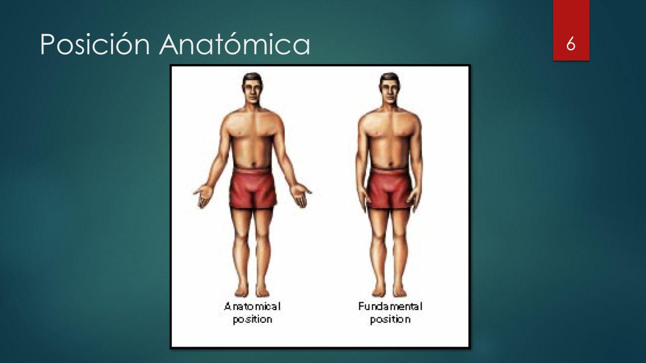Posición Anatómica 6