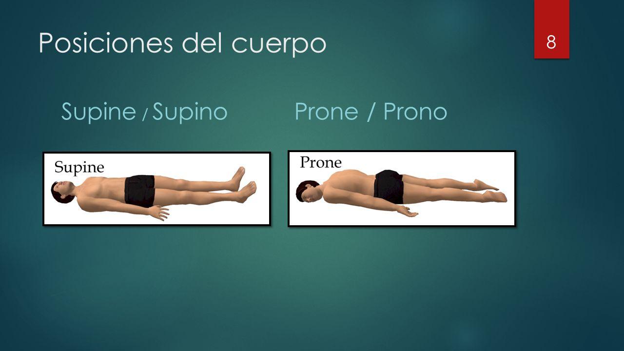 Posiciones del cuerpo Supine / SupinoProne / Prono 8