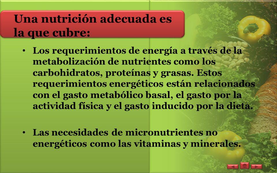Una nutrición adecuada es la que cubre: Los requerimientos de energía a través de la metabolización de nutrientes como los carbohidratos, proteínas y grasas.