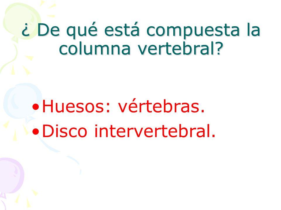 ¿ De qué está compuesta la columna vertebral? Huesos: vértebras. Disco intervertebral.