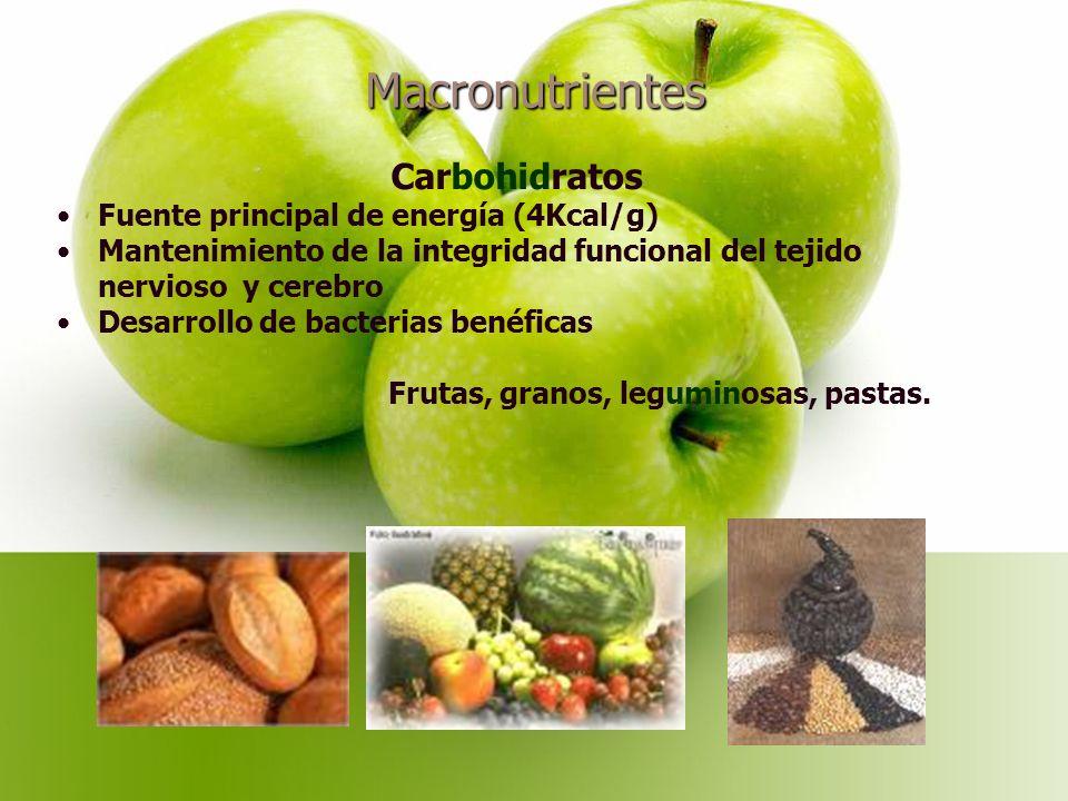 Macronutrientes Carbohidratos Fuente principal de energía (4Kcal/g) Mantenimiento de la integridad funcional del tejido nervioso y cerebro Desarrollo de bacterias benéficas Frutas, granos, leguminosas, pastas.