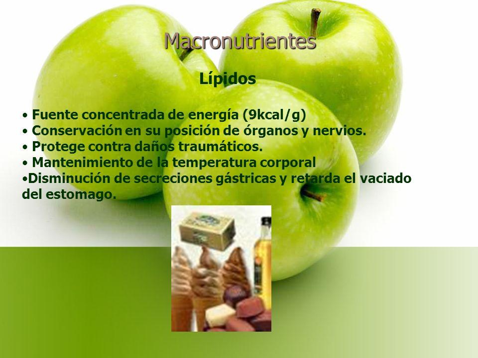 Macronutrientes Lípidos Fuente concentrada de energía (9kcal/g) Conservación en su posición de órganos y nervios.