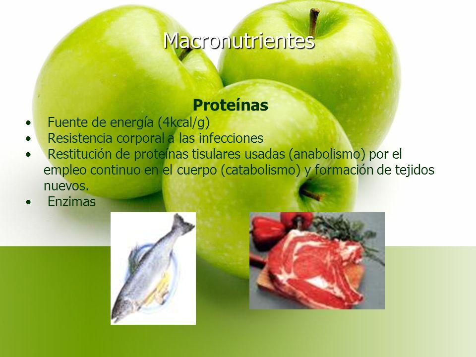 Macronutrientes Proteínas Fuente de energía (4kcal/g) Resistencia corporal a las infecciones Restitución de proteínas tisulares usadas (anabolismo) por el empleo continuo en el cuerpo (catabolismo) y formación de tejidos nuevos.
