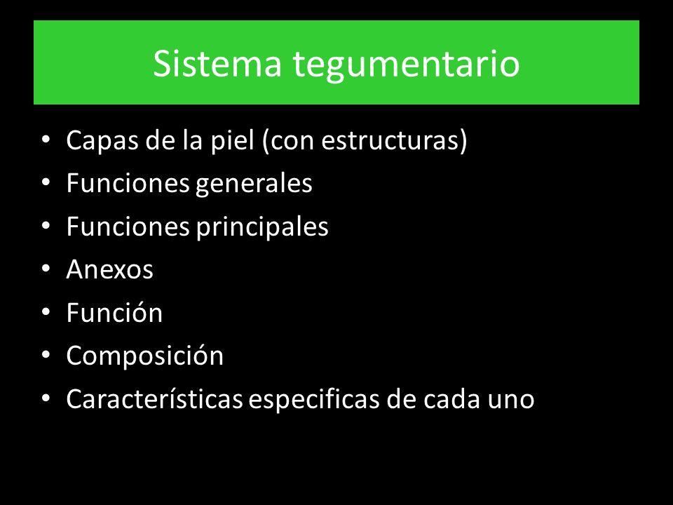 Sistema tegumentario Capas de la piel (con estructuras) Funciones generales Funciones principales Anexos Función Composición Características especificas de cada uno