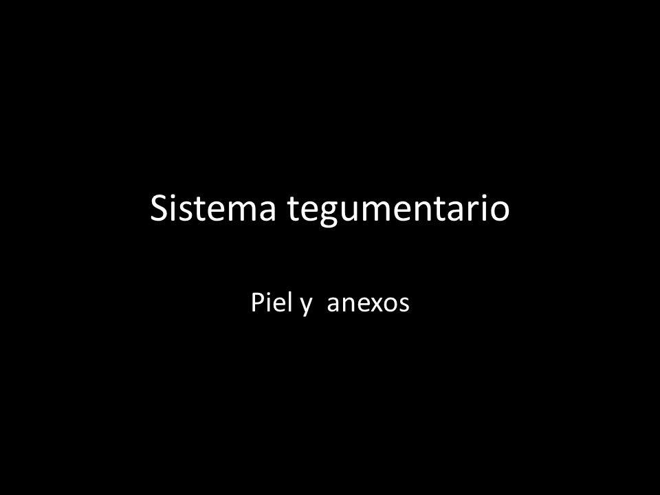 * PELO * PRESENTE EN CASI TODO EL CUERPO, PROTEJE DE HERIDAS,RAYOS SOLARES, DISMINUYE LA PERDIDA DE CALOR.