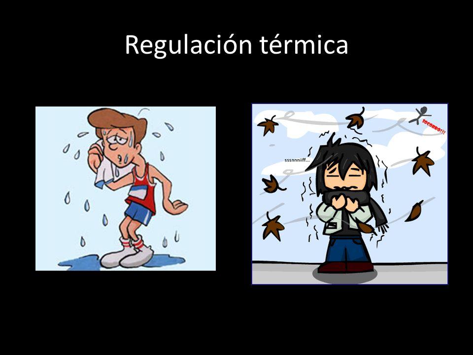Regulación térmica