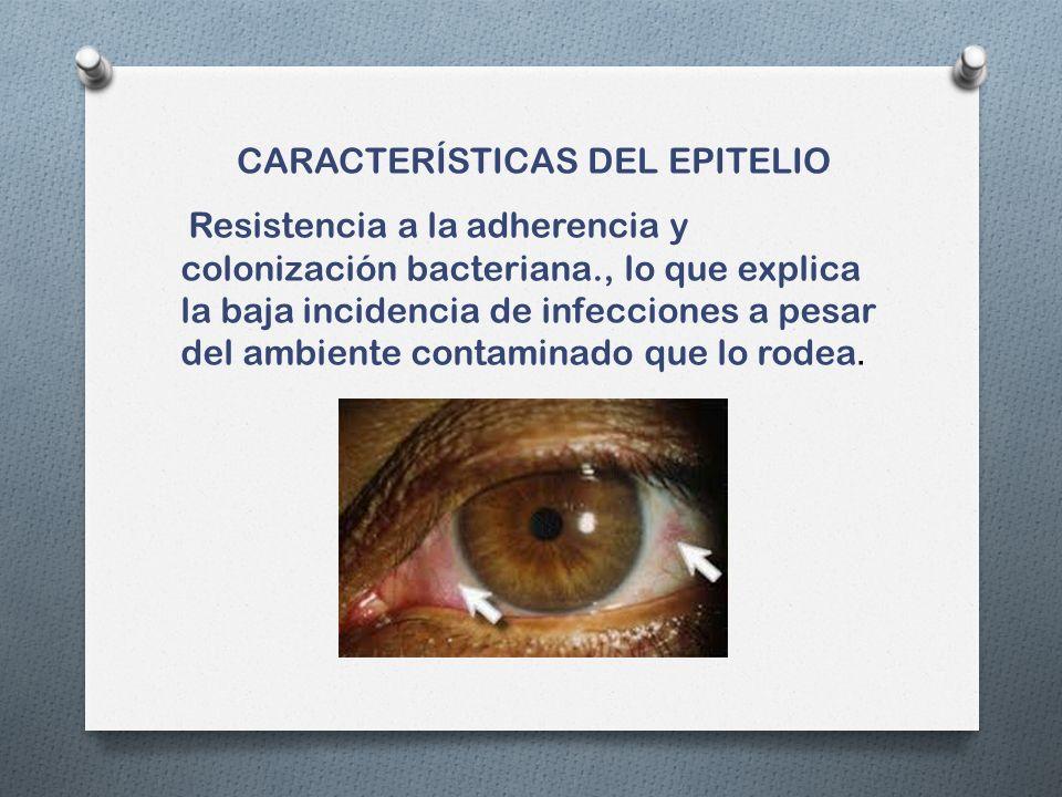 CARACTERÍSTICAS DEL EPITELIO Resistencia a la adherencia y colonización bacteriana., lo que explica la baja incidencia de infecciones a pesar del ambiente contaminado que lo rodea.