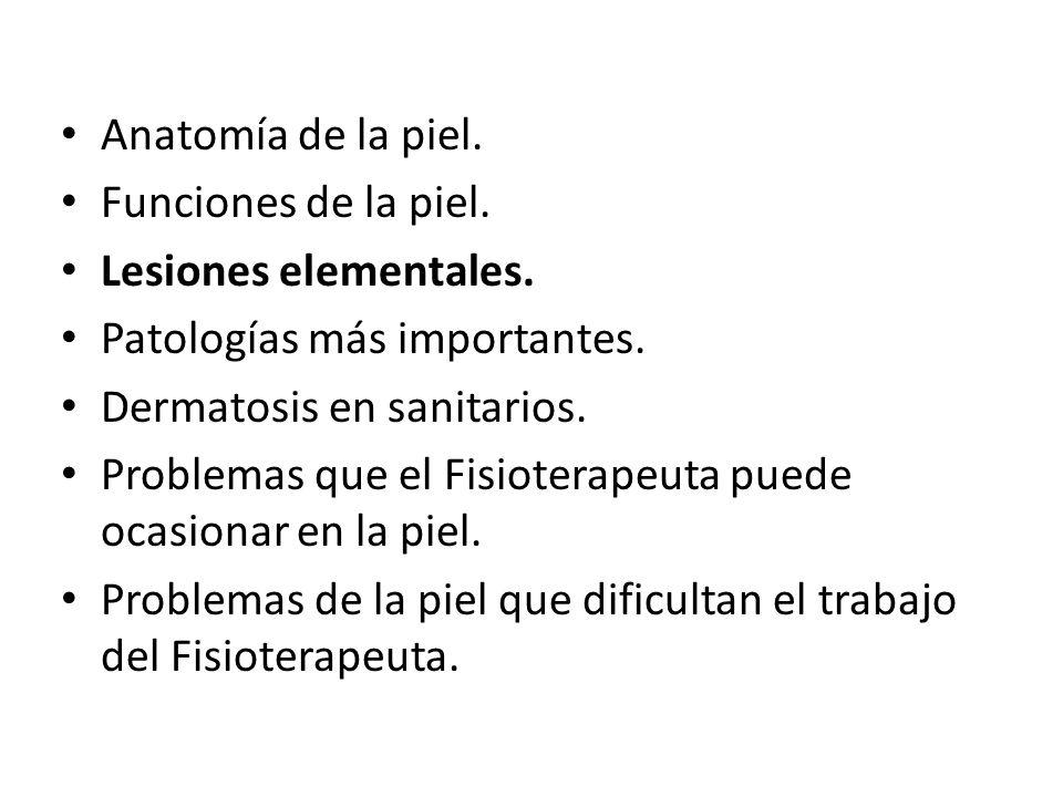 Anatomía de la piel.Funciones de la piel. Lesiones elementales.