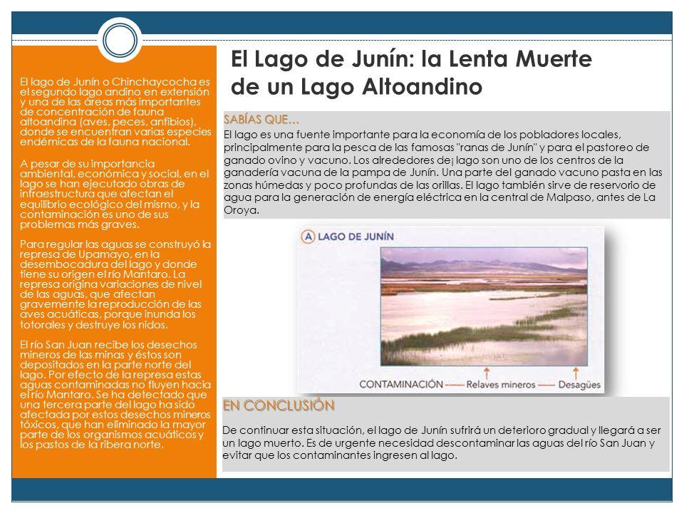 El Lago de Junín: la Lenta Muerte de un Lago Altoandino El lago de Junín o Chinchaycocha es el segundo lago andino en extensión y una de las áreas más importantes de concentración de fauna altoandina (aves, peces, anfibios), donde se encuentran varias especies endémicas de la fauna nacional.