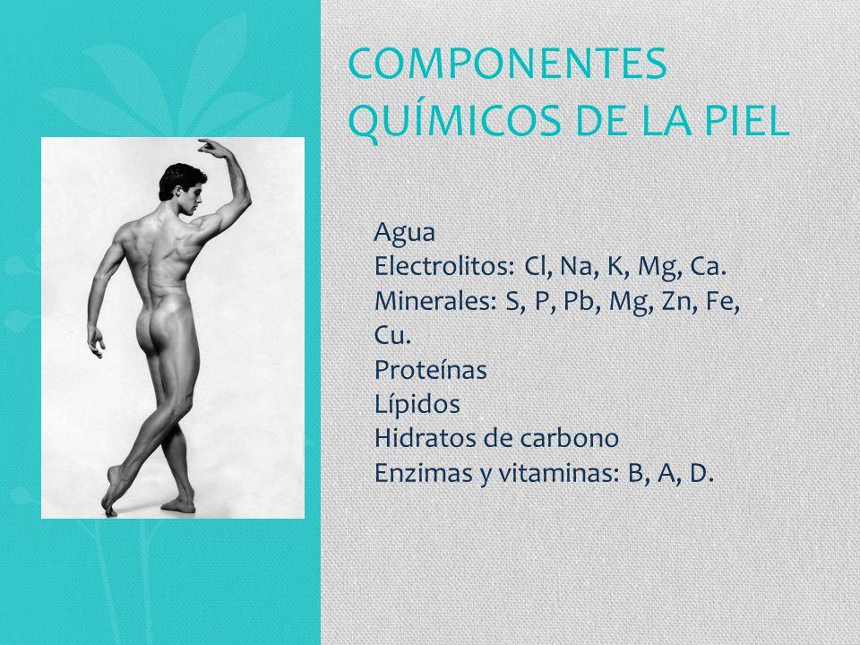 COMPONENTES QUÍMICOS DE LA PIEL Agua Electrolitos: Cl, Na, K, Mg, Ca.