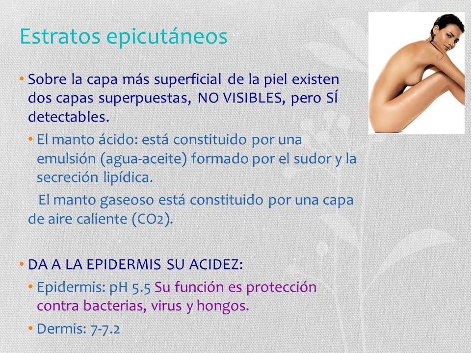 Estratos epicutáneos Sobre la capa más superficial de la piel existen dos capas superpuestas, NO VISIBLES, pero SÍ detectables.