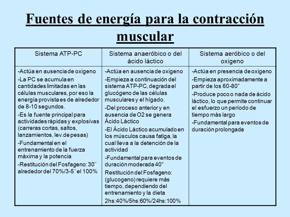 Fuentes de energía para la contracción muscular Sistema ATP-PCSistema anaeróbico o del ácido láctico Sistema aeróbico o del oxigeno -Actúa en ausencia de oxigeno -La PC se acumula en cantidades limitadas en las células musculares, por eso la energía provista es de alrededor de 8-10 segundos.