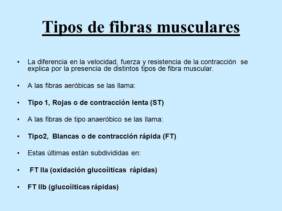 Tipos de fibras musculares La diferencia en la velocidad, fuerza y resistencia de la contracción se explica por la presencia de distintos tipos de fibra muscular.