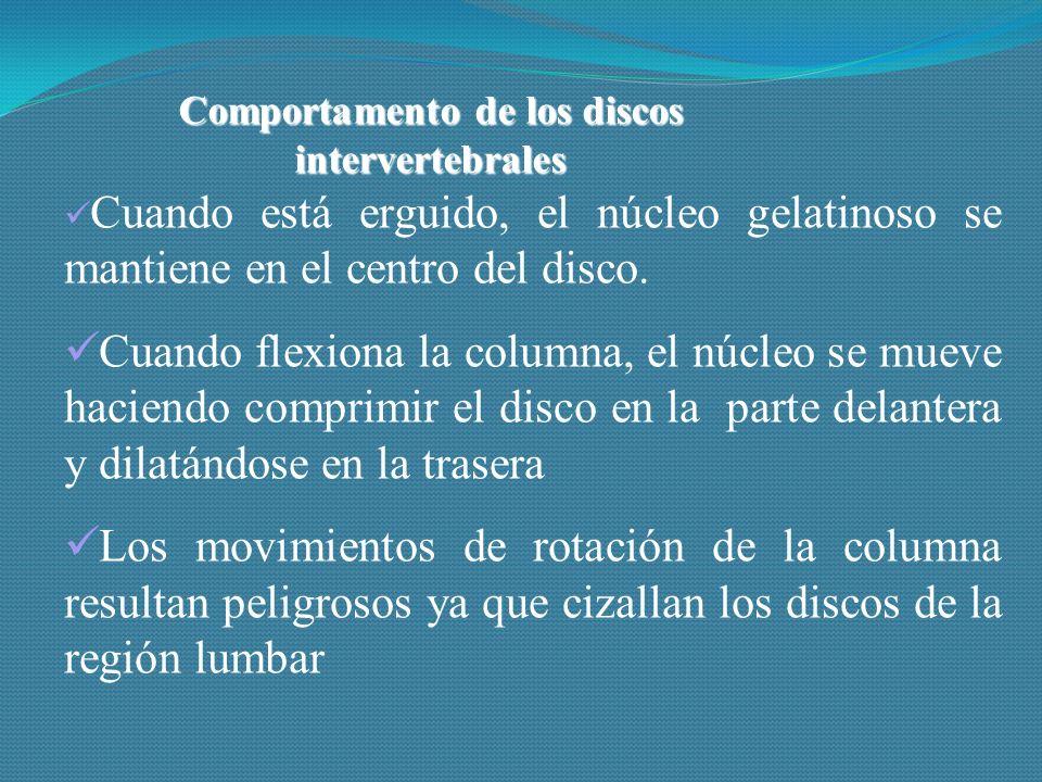 Comportamento de los discos intervertebrales Cuando está erguido, el núcleo gelatinoso se mantiene en el centro del disco.