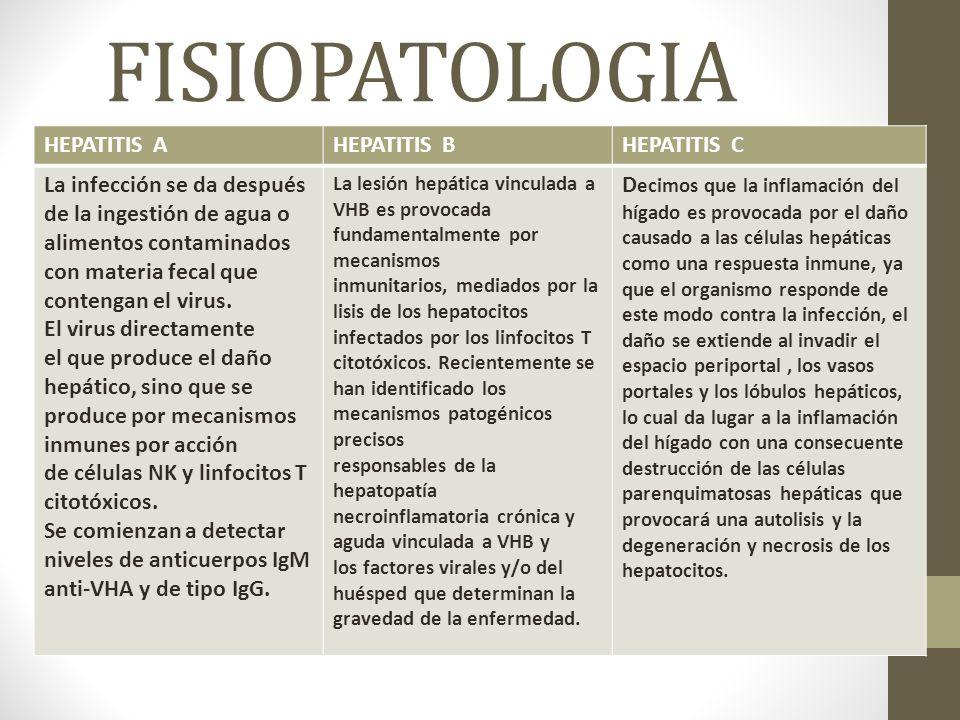 FISIOPATOLOGIA HEPATITIS AHEPATITIS BHEPATITIS C La infección se da después de la ingestión de agua o alimentos contaminados con materia fecal que contengan el virus.
