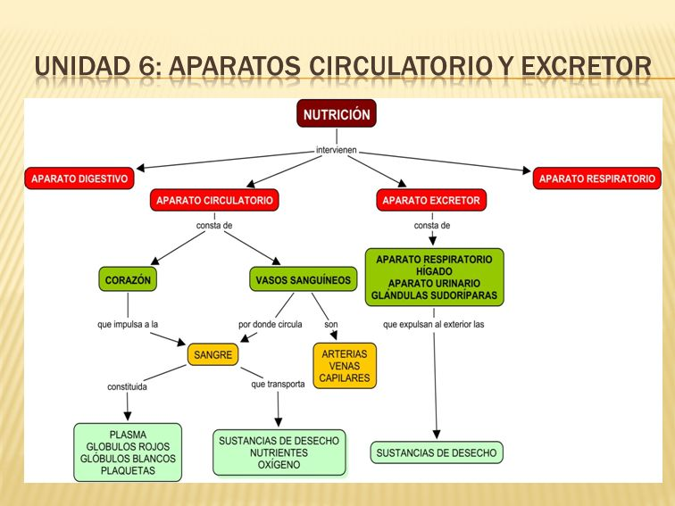  En la función vital de nutrición participan de forma coordinada 4 aparatos:  El aparato digestivo.