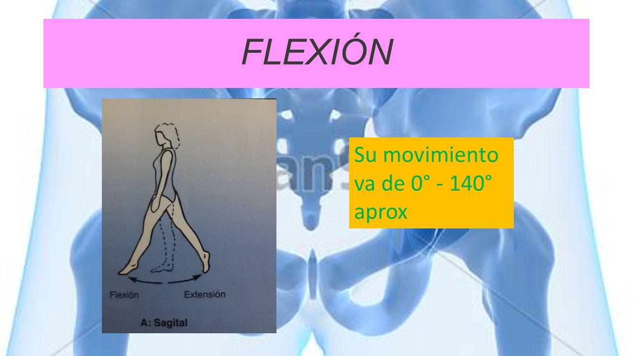 FLEXIÓN Su movimiento va de 0° - 140° aprox