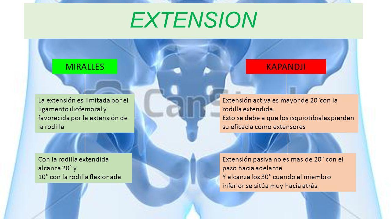 EXTENSION La extensión es limitada por el ligamento iliofemoral y favorecida por la extensión de la rodilla Con la rodilla extendida alcanza 20° y 10°