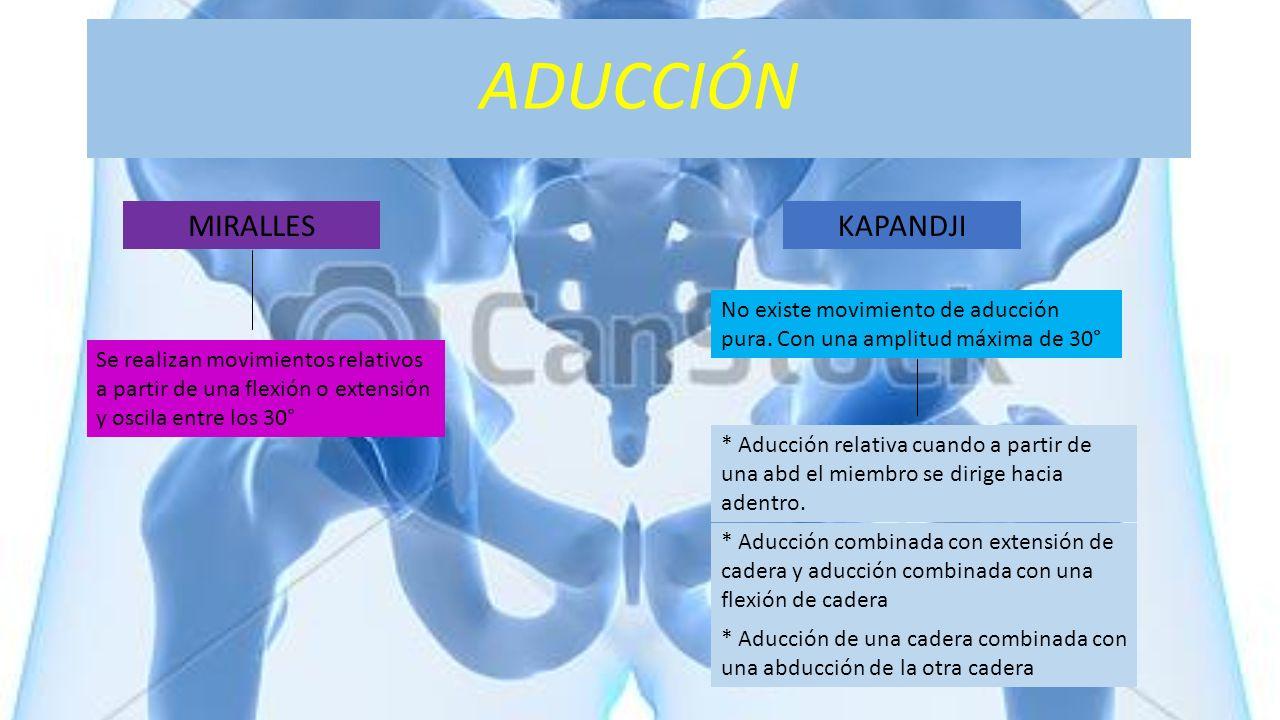 ADUCCIÓN KAPANDJI No existe movimiento de aducción pura. Con una amplitud máxima de 30° * Aducción relativa cuando a partir de una abd el miembro se d
