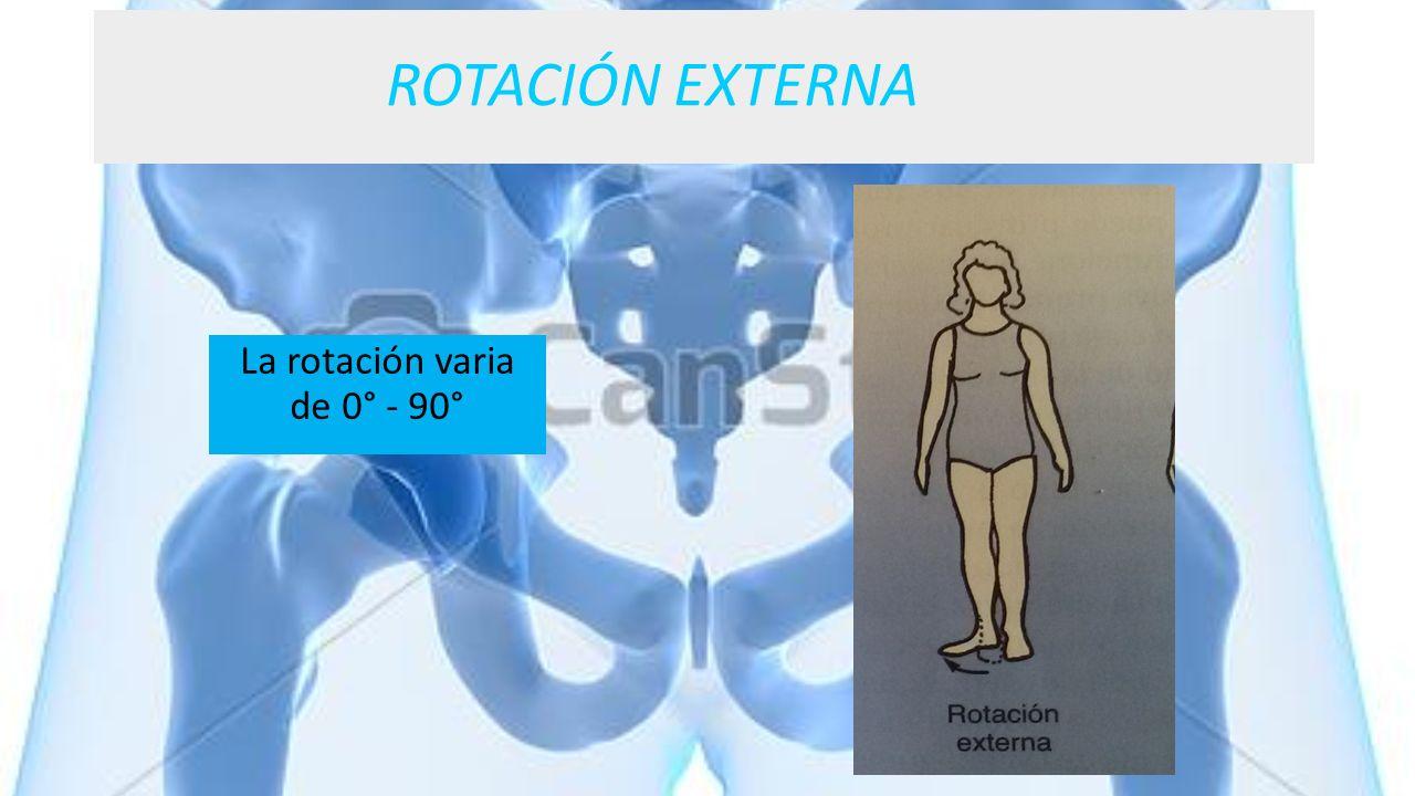 ROTACIÓN EXTERNA La rotación varia de 0° - 90°
